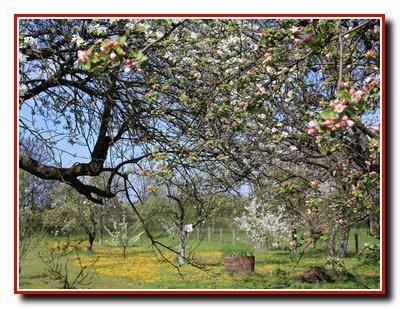 Устройство плодового дерева