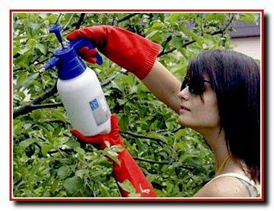 Борьба  с  садовыми вредителями и болезнями плодовых деревьев