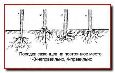 Подготовка почвы и посадка деревьев.