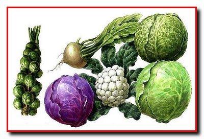 Агротехника овощных культур. Требования к условиям среды.