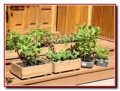 Посев  овощных культур. Способы посева и посадки