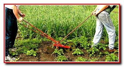 Присмотр за овощными культурами