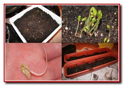 Семена. Определение их качества.