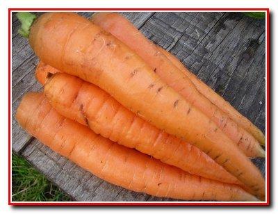 Корнеплоды. Морковь.