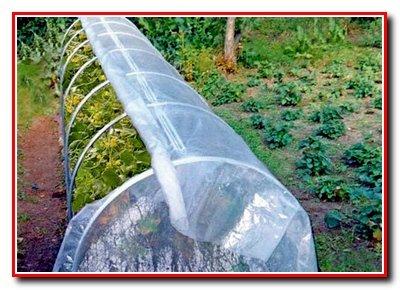 Выбор места для  овощных культур закрытого типа