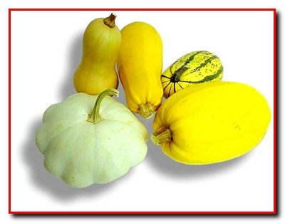 Выращивание кабачков, патиссонов,цукини