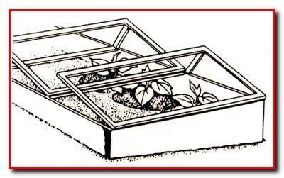 Выращивание огурцов в парниках
