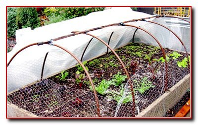 Кукуруза на огороде удобрения для