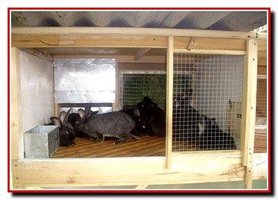 Клетки для кроликов, курятники