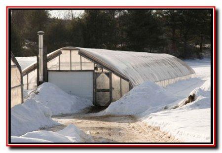 Огурцы в  зимних отапливаемых теплицах