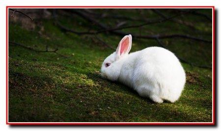 Разведение и выращивание кроликов