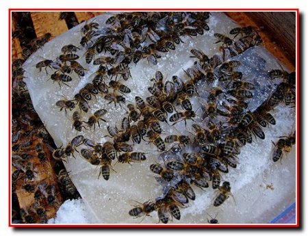 Кормление и зимовка пчел