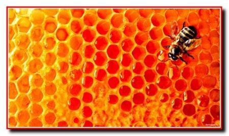 Определение качества пчелиной семьи
