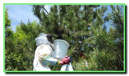 Расширение пчелиных семей