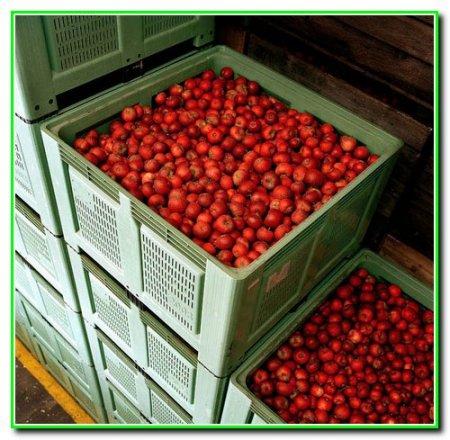 Хранение свежих плодов