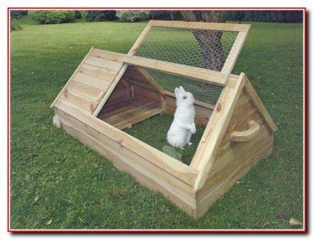 Содержание и размножение кроликов