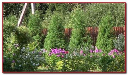 Огород, сад, теплица