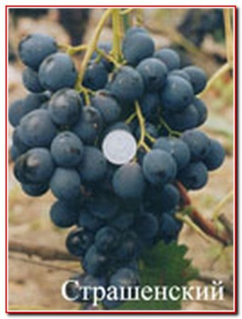 Ранние сорта винограда